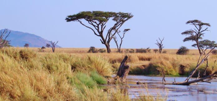 tanzania, africa, serengeti